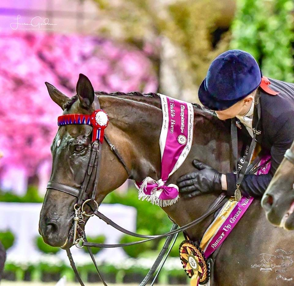 Are you qualified for the 2019 Grand National Show Horse Championships